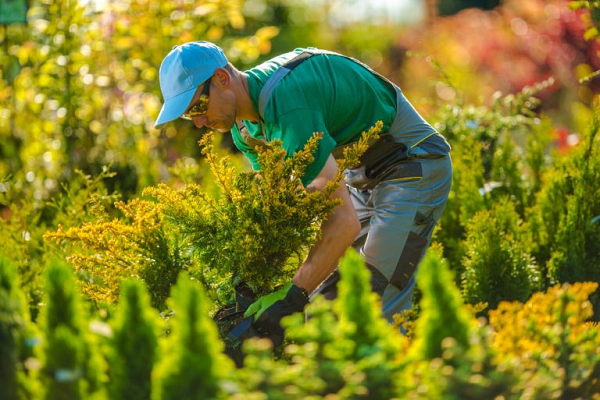 Why to Hire a Lawn Care Company